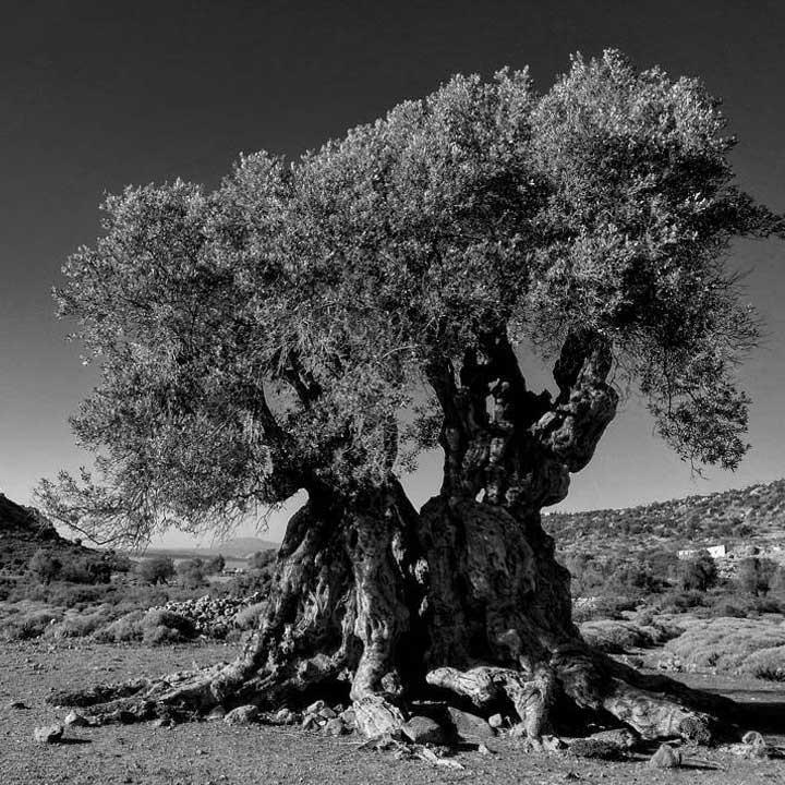 Elaiwnas-Aegina