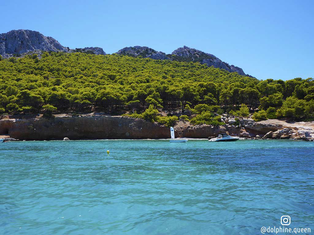 Moni-Island